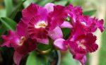 kvetoucí orchidej