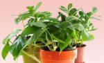 pokojové rostliny mix