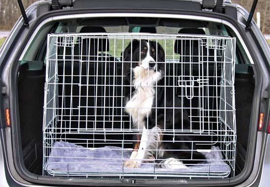 pes ve skosené kleci do auta