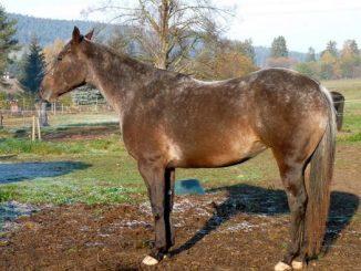 ohradnik pro koně