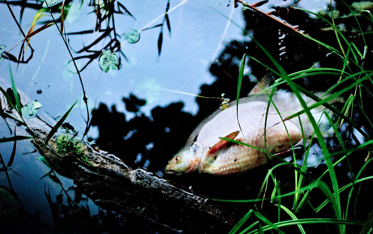 mrtva ryba