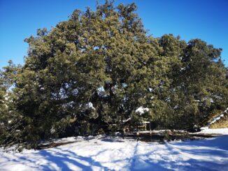 strom roku